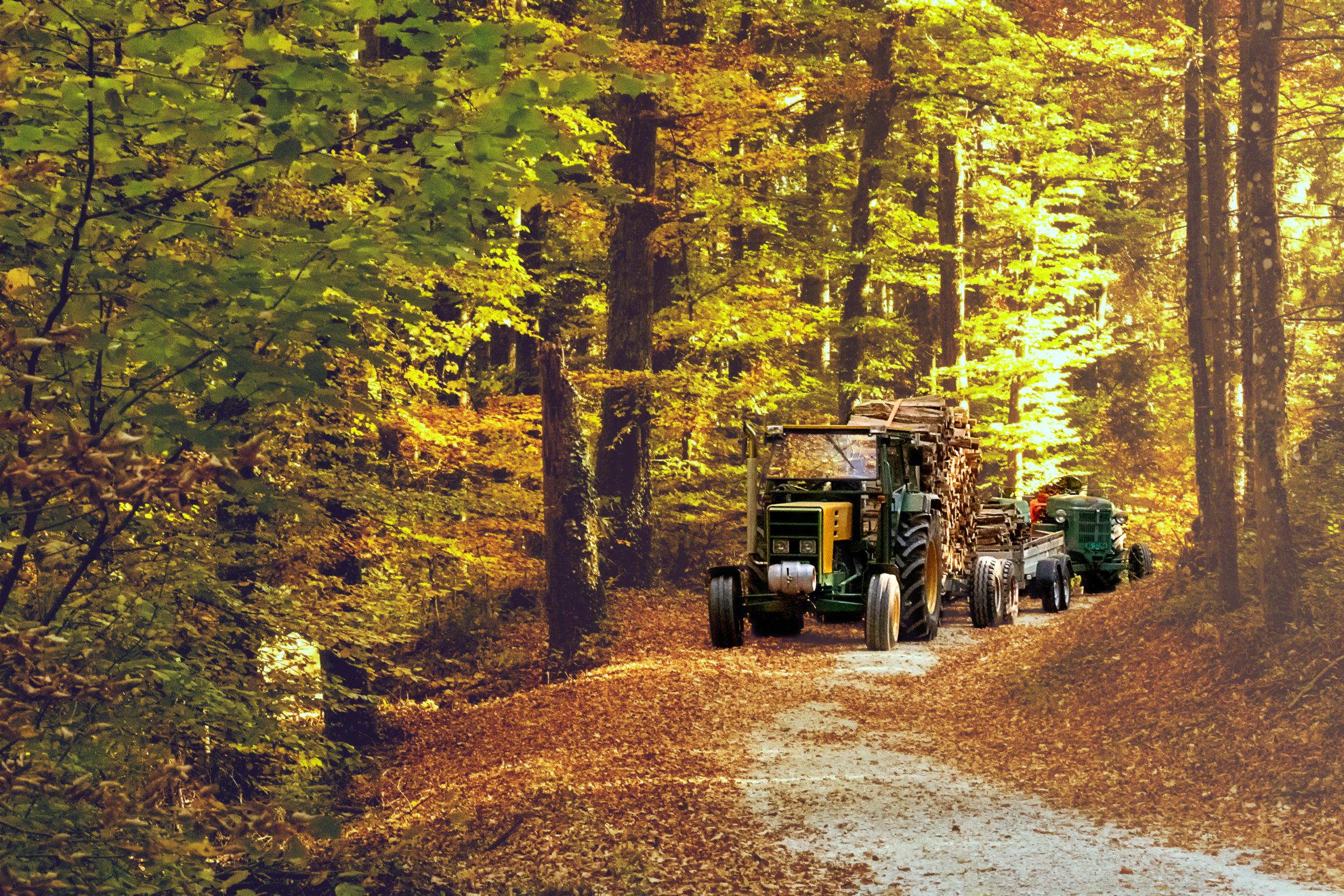Zwitserland, bos hout hakken